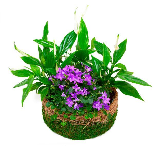 Combinación plantas