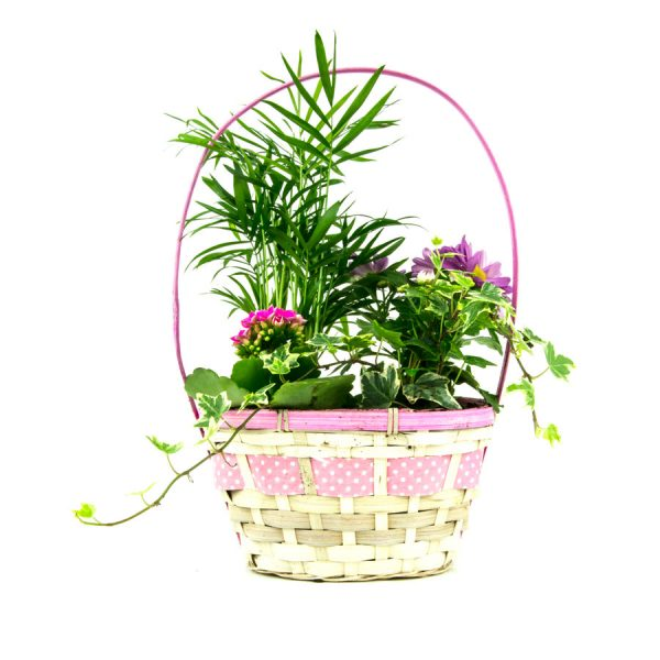 Canasta plantas